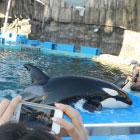 ゴールデンウィークに名古屋港水族館デートしてシャチとかイルカとかペンギンとか見たから報告ですっ!! GW7