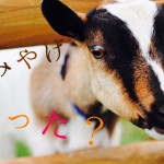 夏休みにマザー牧場でジンギスカン食べたりマザーファームツアーに行ったので報告ですっ!! その5